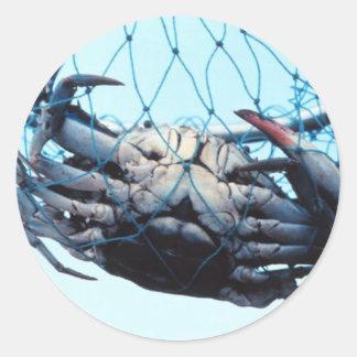 Cangrejo azul de cogida etiquetas redondas