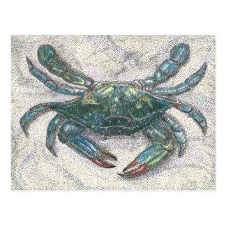 Cangrejo azul de la bahía de Chesapeake Tarjeta Postal