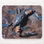 Cangrejo azul de Maryland Alfombrillas De Raton