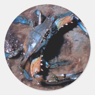 Cangrejo azul de Maryland Pegatina Redonda