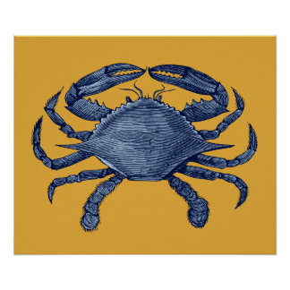 Cangrejo azul impresiones