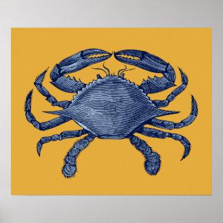 Cangrejo azul póster