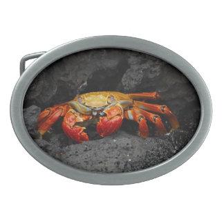 Cangrejo colorido hebillas cinturón ovales