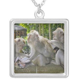 Cangrejo-comiendo el Macaque, fasciularis del Maca Joyerias