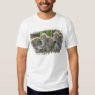 Cangrejo-comiendo el Macaque, fasciularis del Playeras