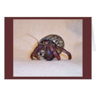 Cangrejo de ermitaño #3 tarjeta de felicitación