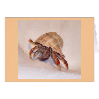 Cangrejo de ermitaño #7 tarjeta de felicitación
