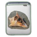 Cangrejo de ermitaño en la arena que sale de la cá fundas para iPads