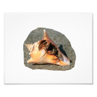 Cangrejo de ermitaño en la arena que sale de la cá impresion fotografica