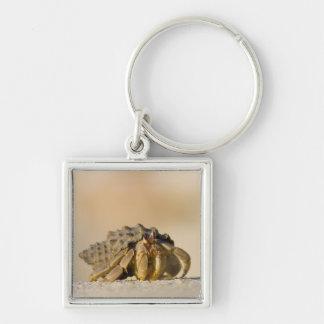 Cangrejo de ermitaño en la playa blanca de la aren llavero cuadrado plateado
