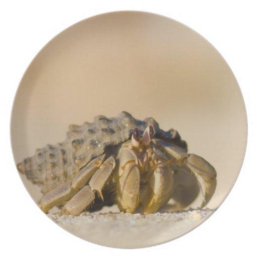 Cangrejo de ermitaño en la playa blanca de la aren plato