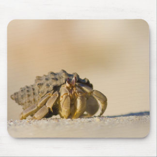 Cangrejo de ermitaño en la playa blanca de la aren alfombrillas de ratón