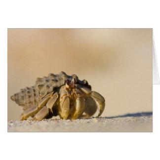 Cangrejo de ermitaño en la playa blanca de la aren tarjeta de felicitación