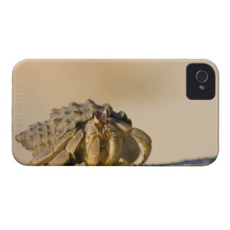 Cangrejo de ermitaño en la playa blanca de la carcasa para iPhone 4 de Case-Mate