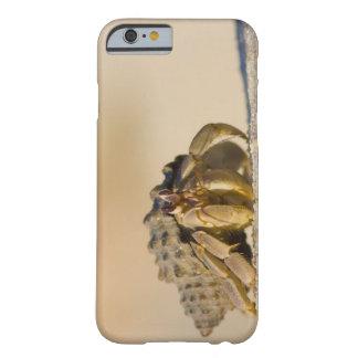 Cangrejo de ermitaño en la playa blanca de la funda barely there iPhone 6