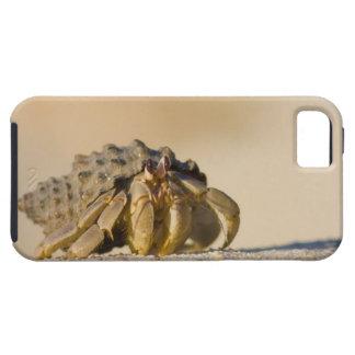 Cangrejo de ermitaño en la playa blanca de la funda para iPhone SE/5/5s