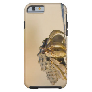 Cangrejo de ermitaño en la playa blanca de la funda resistente iPhone 6
