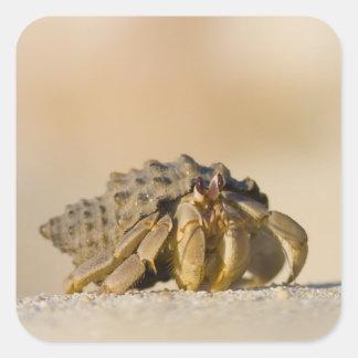 Cangrejo de ermitaño en la playa blanca de la pegatina cuadrada
