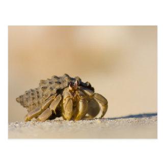 Cangrejo de ermitaño en la playa blanca de la tarjeta postal