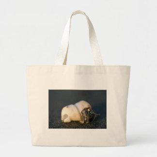 Cangrejo de ermitaño en la playa bolsas