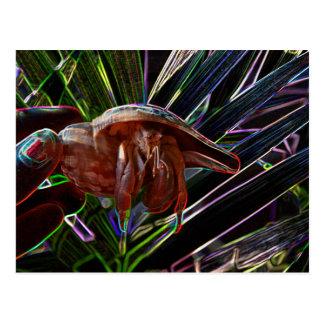 cangrejo de ermitaño fuera de la chispa de la tarjeta postal