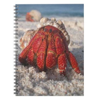 Cangrejo de ermitaño lindo en el primer blanco de notebook