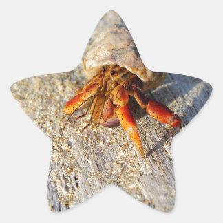 Cangrejo de ermitaño pegatina en forma de estrella