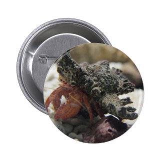 Cangrejo de ermitaño pin