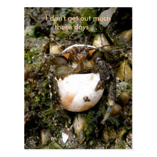 Cangrejo de ermitaño, puerto holandés, Alaska Tarjetas Postales