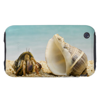 Cangrejo de ermitaño que mira una cáscara más tough iPhone 3 cobertura