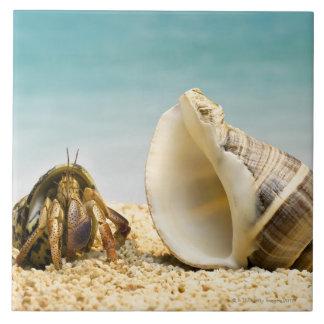 Cangrejo de ermitaño que mira una cáscara más gran azulejo cuadrado grande