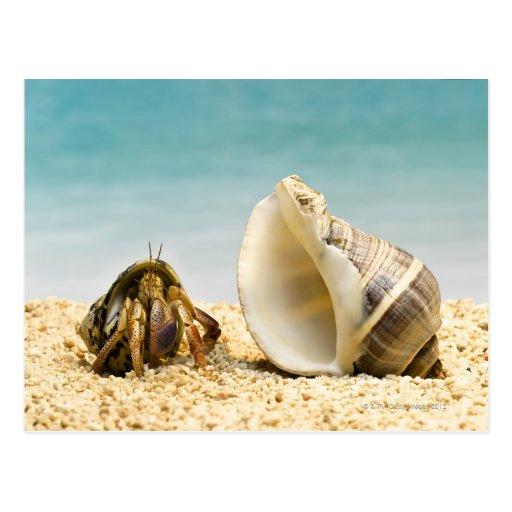 Cangrejo de ermitaño que mira una cáscara más gran tarjeta postal