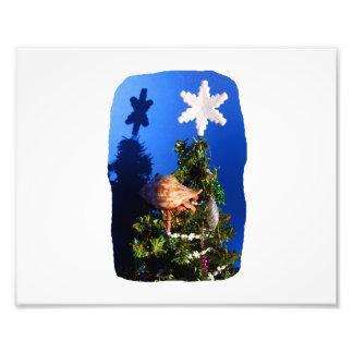 Cangrejo de ermitaño que sube abajo el árbol de na impresiones fotograficas