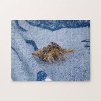Cangrejo de ermitaño salvaje en foto de la vida de puzzle con fotos