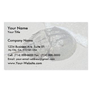 Cangrejo de herradura - varón tarjetas de visita