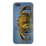 Cangrejo de oro iPhone 5 cobertura