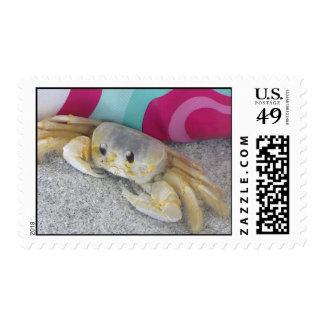 cangrejo del fantasma sellos
