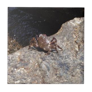 Cangrejo del Mar Negro Azulejo Cuadrado Pequeño