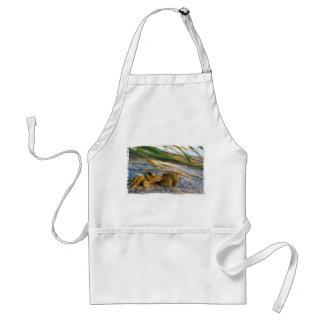 Cangrejo en la duna de la playa en la puesta del s delantales