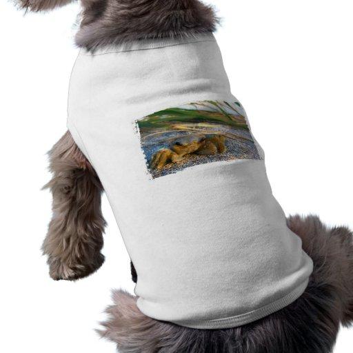Cangrejo en la duna de la playa en la puesta del s camisa de perro