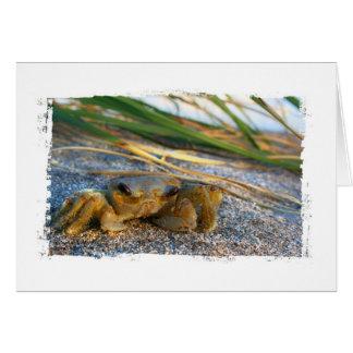 Cangrejo en la duna de la playa en la puesta del s felicitacion