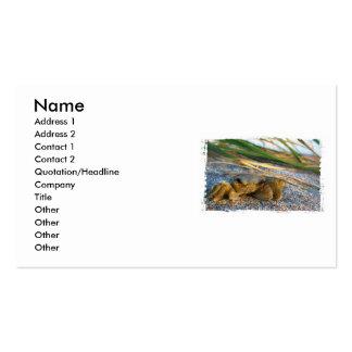 Cangrejo en la duna de la playa en la puesta del s tarjetas de negocios