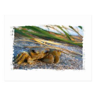 Cangrejo en la duna de la playa en la puesta del s tarjetas postales