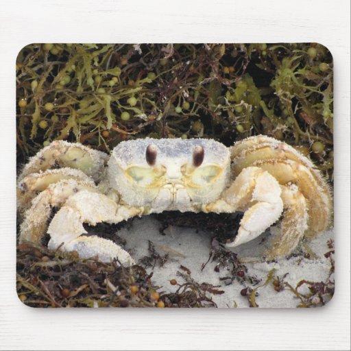 Cangrejo en la playa tapete de ratón