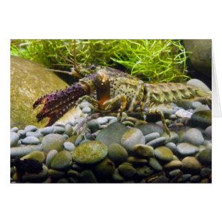 Cangrejos de agua dulce tarjeta de felicitación