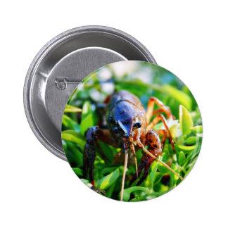 Cangrejos de los Crawdads de los cangrejos Pins
