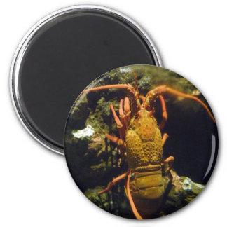 Cangrejos de Nueva Zelanda Imán Redondo 5 Cm