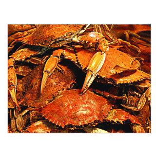 Cangrejos duros cocidos al vapor de Maryland Tarjetas Postales
