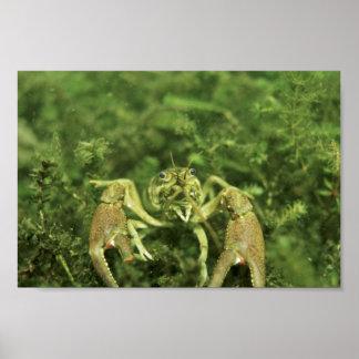 Cangrejos Impresiones