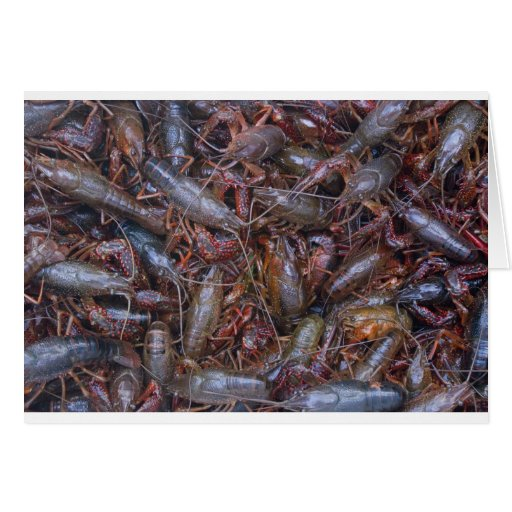 cangrejos vivos tarjetón